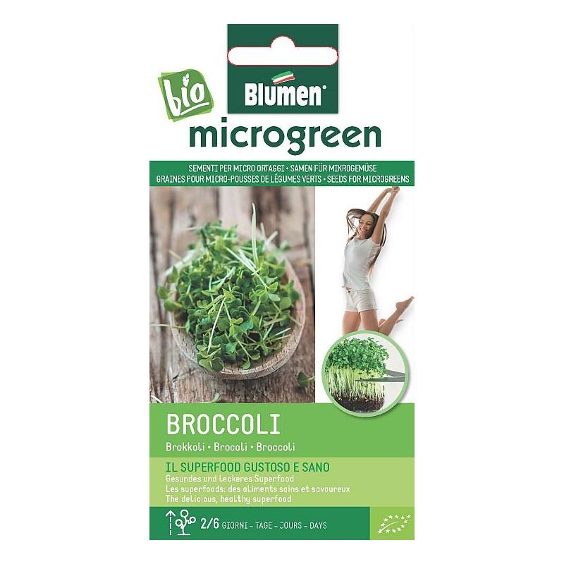 Broccoli- Microgemüse BIO