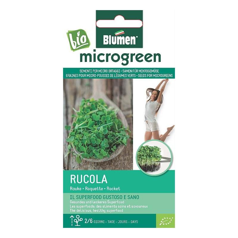 Ruccola - Rauke - Microgemüse