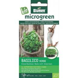 Grünes Basilikum - Microgemüse