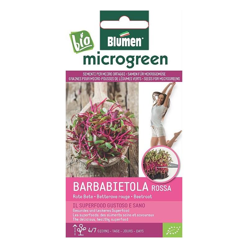 Rote Rüben/ rote Bete - Microgreen BIO