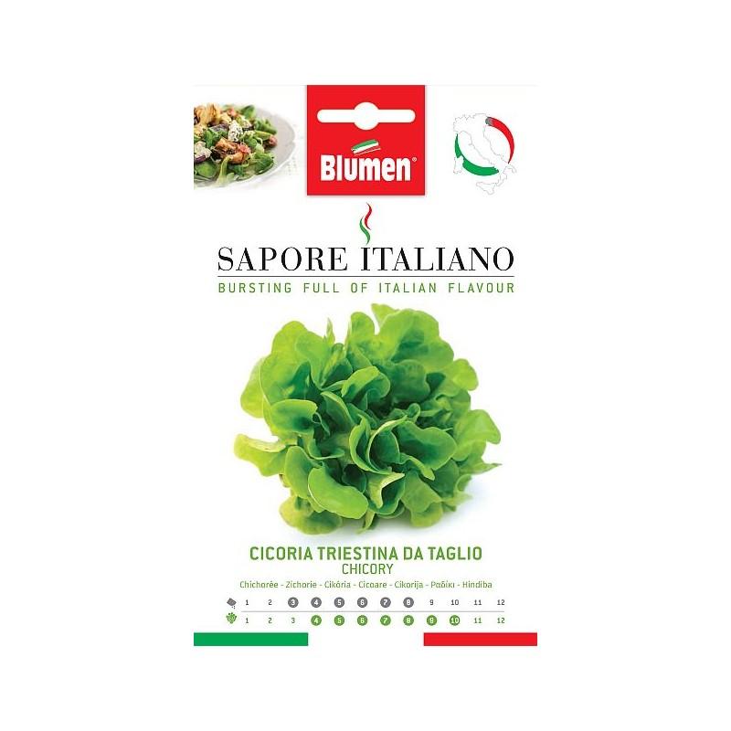 Salat Chicorée für den Schnitt geeignete Früh-Sorte. - gesund