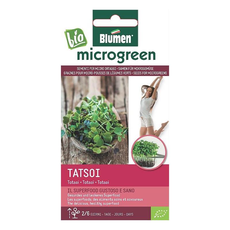Tatsoi-Microgemüse Gesundes und leckeres Superfood, BIO zertifiziertes Saatgut - Microgreens