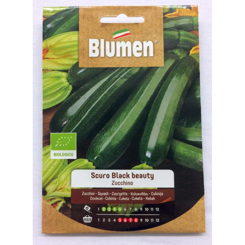 Zucchini Scuro Black BeautyBIO Samen - Regionen Italiens