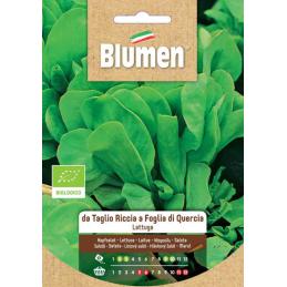 Schnitt- Pflücksalat grün - da Taglio Riccia a Foglia di Quercia - Regionen Italiens