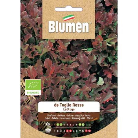 copy of Zwiebeln-grüne Sprossen
