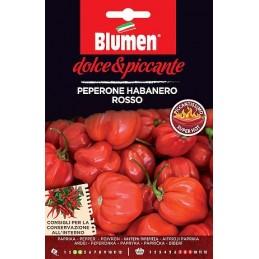 HABANERO ROSSO der rote Habanero ist eine klassische Sorte. - Regionen Italiens