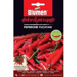 CHILIYUCATAN Der Yucatan Chili ist die Frucht einer schönen Pflanze, die 30 - 40 Zentimeter hoch werden kann. - Regione