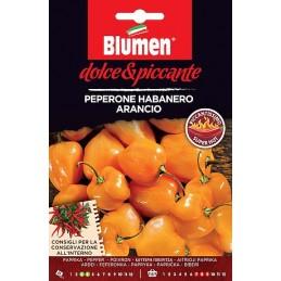 CHILI HABANERO ARANCIO Sehr scharfer, fruchtig-aromatischer Habanero Sorte. - Regionen Italiens