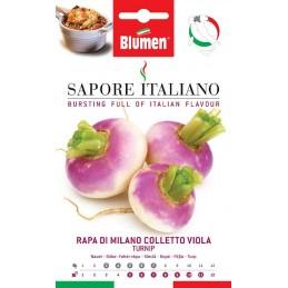 Rübe Di Milano Colletto Viola - Regionen Italiens