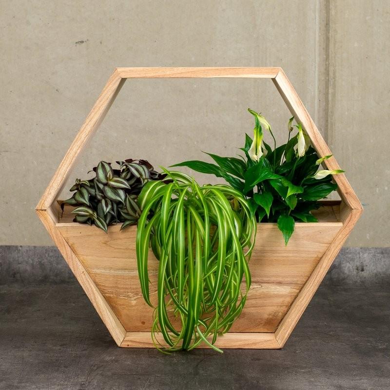 Holzwabe für Pflanzen