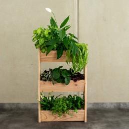 Holzregal für 3 Pflanzen - Samenspezialitäten