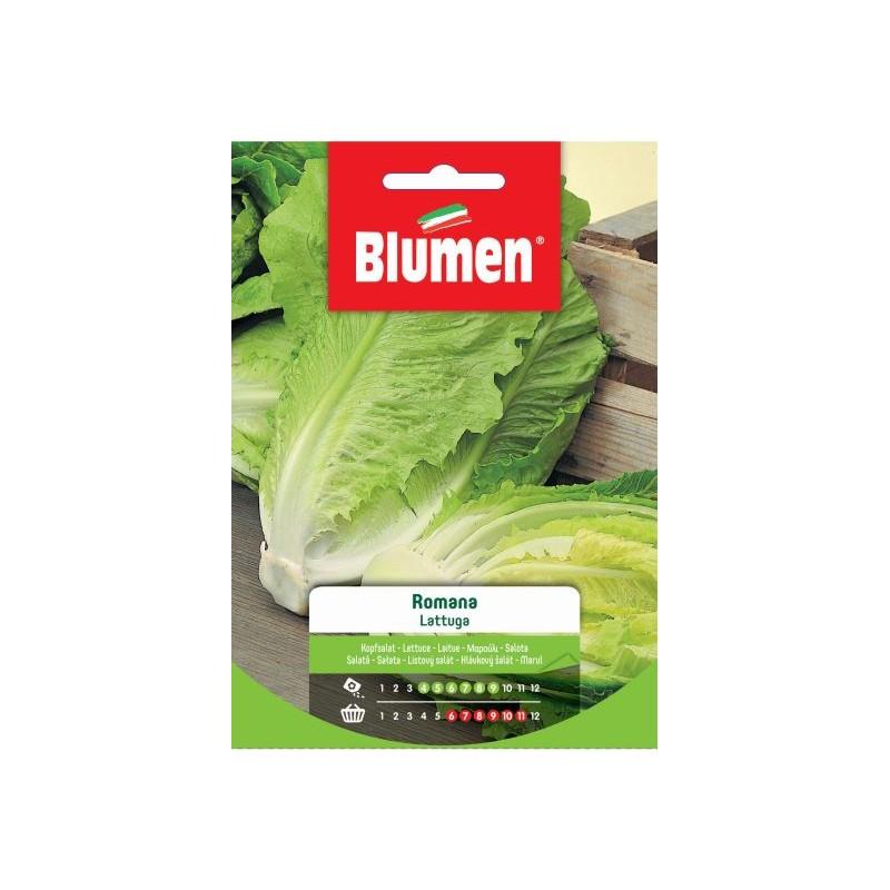 """Salat """"Romana"""" auch Römischer Salat oder Kochsalat - Regionen Italiens"""