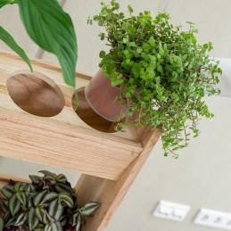 Holzregal für 3 Pflanzen - Raritäten