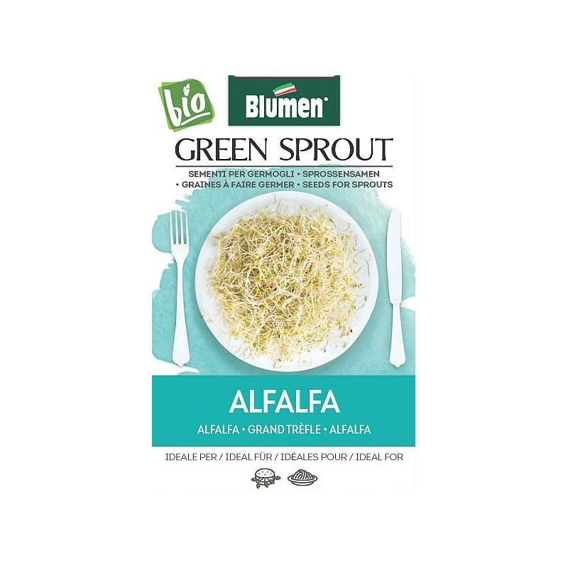 Alfalfa - Sprossen BIO - Raritäten