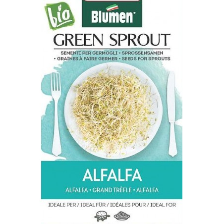 Alfalfa - Sprossen BIO