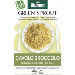 Broccoli - Sprossen BIO -