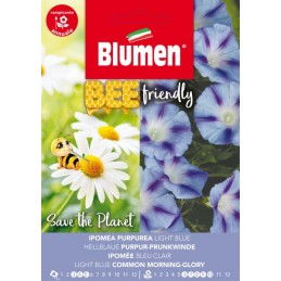 Bee friendly - Blaue  Purpur-Prunkwinde