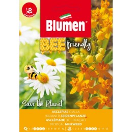 Bee friendly - Gelb-Orangeblühende Seidenpflanze
