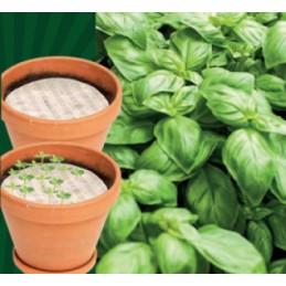 Basilikum Samenpads rund, Packung mit Samen und Dünger - Regionen Italiens