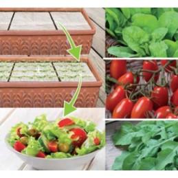 Salat Mix Samenpads Salat Mix mit Samen und Dünger - Regionen Italiens