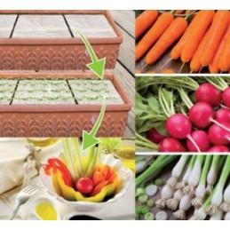 Snack Gemüse MIX Samenpadsmit Samen und Dünger - Regionen Italiens