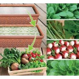 Herbst-Garten MIX Samenpads mit Samen und Dünger - Regionen Italiens