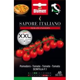 "Tomate / Paradeiser ""Scintilla"" F.1"