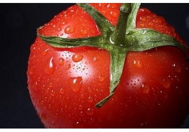 ITALIEN ist die Heimat unzähliger Tomatensorten.
