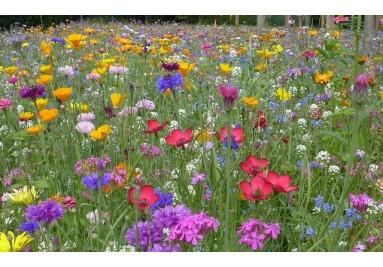 Eine Blumenwiesen verwandeln jeden Garten in etwas Einzigartiges voller Farbenpracht.