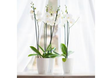 Töpfe für Orchideen und Pflanzen mit Selbstbewässerungssystem