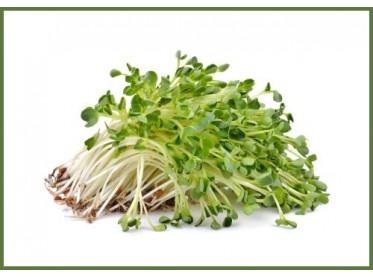 Sprossen & Microgreens